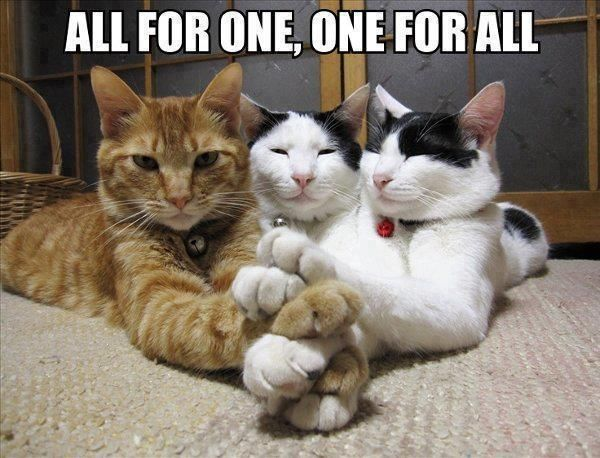 three cats put their front paws each paw on top of another, with the motto All for One and One for All written beneath picture